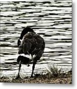 At The Waters Edge Metal Print