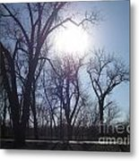 Autumn Afternoon Sun Metal Print