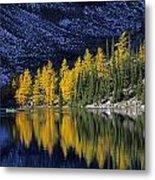 Autumn, Alpine Larch Trees, Lake Agnes Metal Print