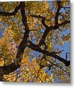 autumn Garry Oak Quercus garryana Klickitat County WA USA Metal Print