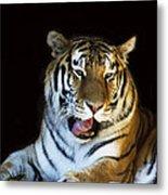 Awaking Tiger Metal Print
