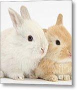 Baby Lop Rabbits Metal Print