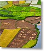 Bac Son Rice Field Metal Print