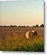Bales In Peanut Field 2 Metal Print by Douglas Barnett