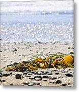 Beach Detail On Pacific Ocean Coast Metal Print by Elena Elisseeva