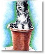 Beardie In A Pot Metal Print