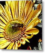 Bee Metal Print by Kelly Rader
