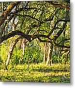 Bent Trees Metal Print