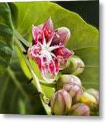 Berry Blossom Metal Print