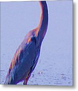 Big Blue Heron At Lake Side Metal Print