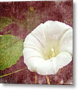 Bindweed - The Wild Perennial Morning Glory Metal Print
