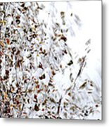 Birch Twigs In Autumn - Multiple Layers Metal Print