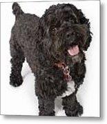Black Bichon-cocker Spaniel Dog Metal Print