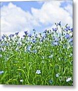 Blooming Flax Field Metal Print by Elena Elisseeva