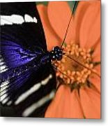 Blue And White Longwing Metal Print
