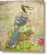 Blue Jay With Texture II Metal Print