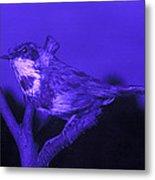 Bluethroat Metal Print by Volker Steger
