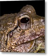 Bobs Robber Frog Metal Print