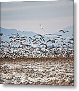 Bombay Beach Birds Metal Print