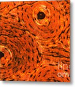 Bone Tissue Metal Print