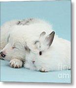 Border Collie Pup Sleeping With Rabbit Metal Print