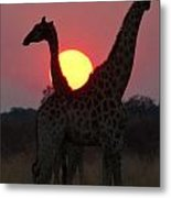 Botswana Sunset Metal Print