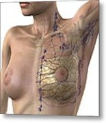 Breast Lymphatic System, Artwork Metal Print