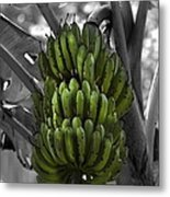 Bunch Of Bananas Metal Print