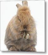 Bunny Grooming Metal Print