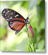 Butterfly Resting Metal Print