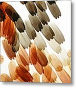 Butterfly Scales, Light Micrograph Metal Print