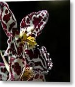 C Ribet Orchids Metal Print