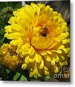 Calendula Named Bon-bon Yellow Metal Print