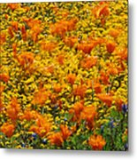 California Poppies And Goldfields Dance Metal Print