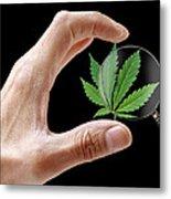 Cannabis Research Metal Print by Victor De Schwanberg