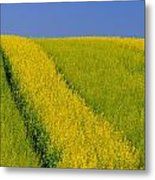 Canola Field, Darlington, Prince Edward Metal Print