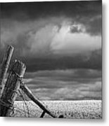 Canola Field In Southern Alberta  Metal Print