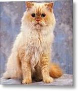 Cat Portrait Of A Cat Metal Print