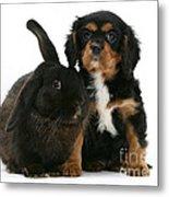 Cavalier King Charles Spaniel And Rabbit Metal Print