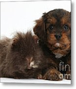 Cavapoo Pup And Shaggy Guinea Pig Metal Print