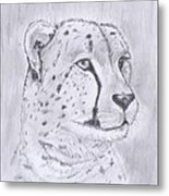 Cheeta Watching Metal Print