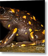 Chilean Mountains False Toad Metal Print