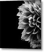 Chrysanthemum In Black And White Metal Print