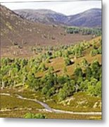 Cleared Scots Pine Forest Metal Print