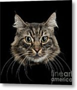 Close Up Of Cats Face Metal Print