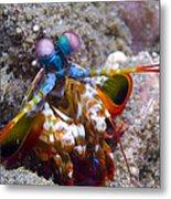 Close-up View Of A Mantis Shrimp, Papua Metal Print
