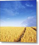 Co Carlow, Ireland Barley Metal Print