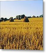 Co Down, Ireland Oats Metal Print