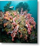 Colorful Reef Scene, Komodo, Indonesia Metal Print