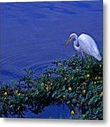 Common Egret Metal Print